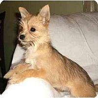 Adopt A Pet :: Merry - Mooy, AL