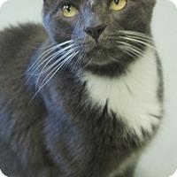 Adopt A Pet :: Freddy - Duluth, GA