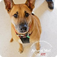 Adopt A Pet :: Diego - Baltimore, MD