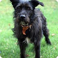 Adopt A Pet :: Joplin fka Marci - Alpharetta, GA