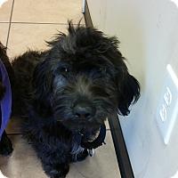Adopt A Pet :: Kelli - Murrells Inlet, SC