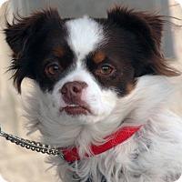 Adopt A Pet :: Barney - Palmdale, CA