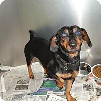 Adopt A Pet :: Owen - Rockville, MD