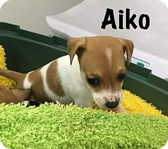 Small Dog Rescue Calgary Alberta