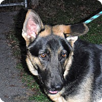 Adopt A Pet :: EMMETT - SAN ANTONIO, TX