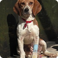 Adopt A Pet :: Willy II - Tampa, FL