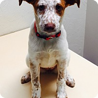 Adopt A Pet :: Molly - SOUTHINGTON, CT