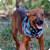 Adopt A Pet :: Rosanna IN ct - Manchester, CT