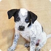 Adopt A Pet :: Nemo- Currently in Foster - Roanoke, VA