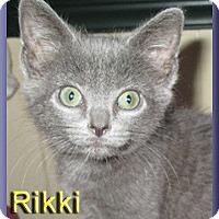 Adopt A Pet :: Rikki - Aldie, VA