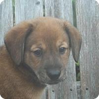 Adopt A Pet :: Ryland - Rocky Mount, NC