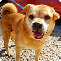 Adopt A Pet :: Angel - Kingston, TN