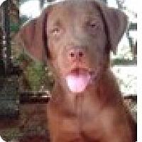 Adopt A Pet :: Comet - Oviedo, FL