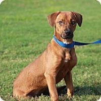 Adopt A Pet :: Lilly - Fenton, MO