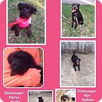 Adopt A Pet :: Fifi - Denver, CO
