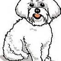 Adopt A Pet :: 319478 LF - Wildomar, CA