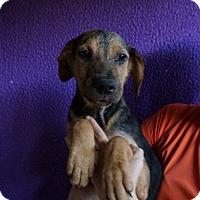 Adopt A Pet :: Abby - Oviedo, FL