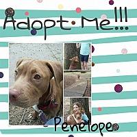 Adopt A Pet :: Penelope - Covington, TN