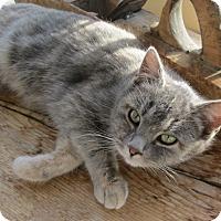 Adopt A Pet :: Kalua - Buhl, ID