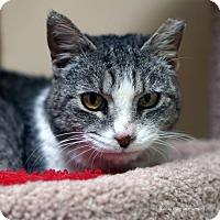 Adopt A Pet :: Abuela - Tucson, AZ