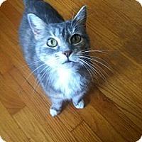 Adopt A Pet :: Jenny - Manchester, CT
