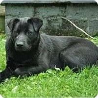 Adopt A Pet :: SugarBear - nashville, TN