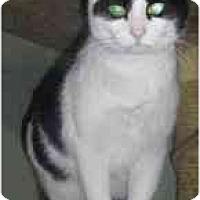 Adopt A Pet :: Fern - Strathmore, AB