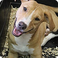 Adopt A Pet :: Esmerelda - Wytheville, VA