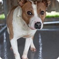 Adopt A Pet :: Mixer - Staunton, VA