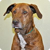 Adopt A Pet :: Murray - Port Washington, NY