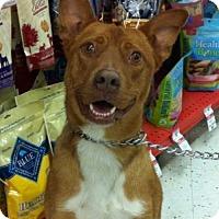 Adopt A Pet :: ALVIN- PENDING ADOPTION! - Birmingham, MI