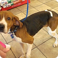 Adopt A Pet :: Conan Hughes - Waldorf, MD