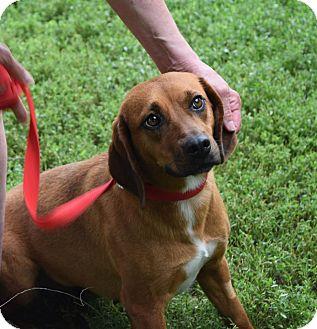 Small Dogs For Adoption Albany Ny