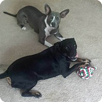 Adopt A Pet :: Ireland - Nashville, TN