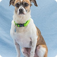 Adopt A Pet :: Silver Cloud - Atlanta, GA