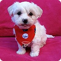 Adopt A Pet :: Chachi - Irvine, CA