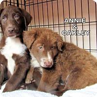 Adopt A Pet :: Annie & Oakley(Puppy) - Lindsay, CA