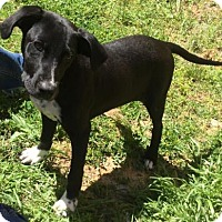 Retriever (Unknown Type) Mix Puppy for adoption in Livingston, Texas - Trooper