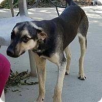 Adopt A Pet :: Eli - Baileyton, AL