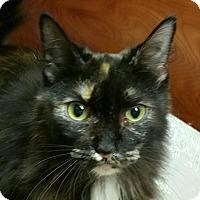 Adopt A Pet :: Bridgette - Fairfax, VA