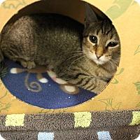 Adopt A Pet :: Sadie - Medina, OH