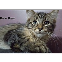 Adopt A Pet :: Buster Brown - a Friend to All - Huntsville, ON