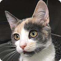 Adopt A Pet :: Nicole - Oakdale, CA