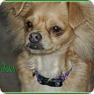 Adopt A Pet :: Webster