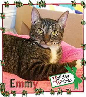 Domestic Shorthair Cat for adoption in East Brunswick, New Jersey - Emmy