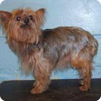Adopt A Pet :: Bea - Bellbrook, OH