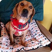 Adopt A Pet :: Penny Pie - Cincinnati, OH