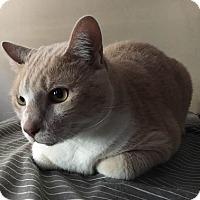 Adopt A Pet :: Prince - Seminole, FL