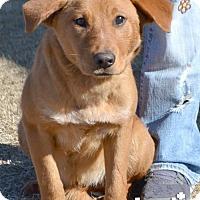 Adopt A Pet :: Dorothy - Washington, DC