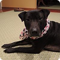Adopt A Pet :: Sosey - Avon, OH